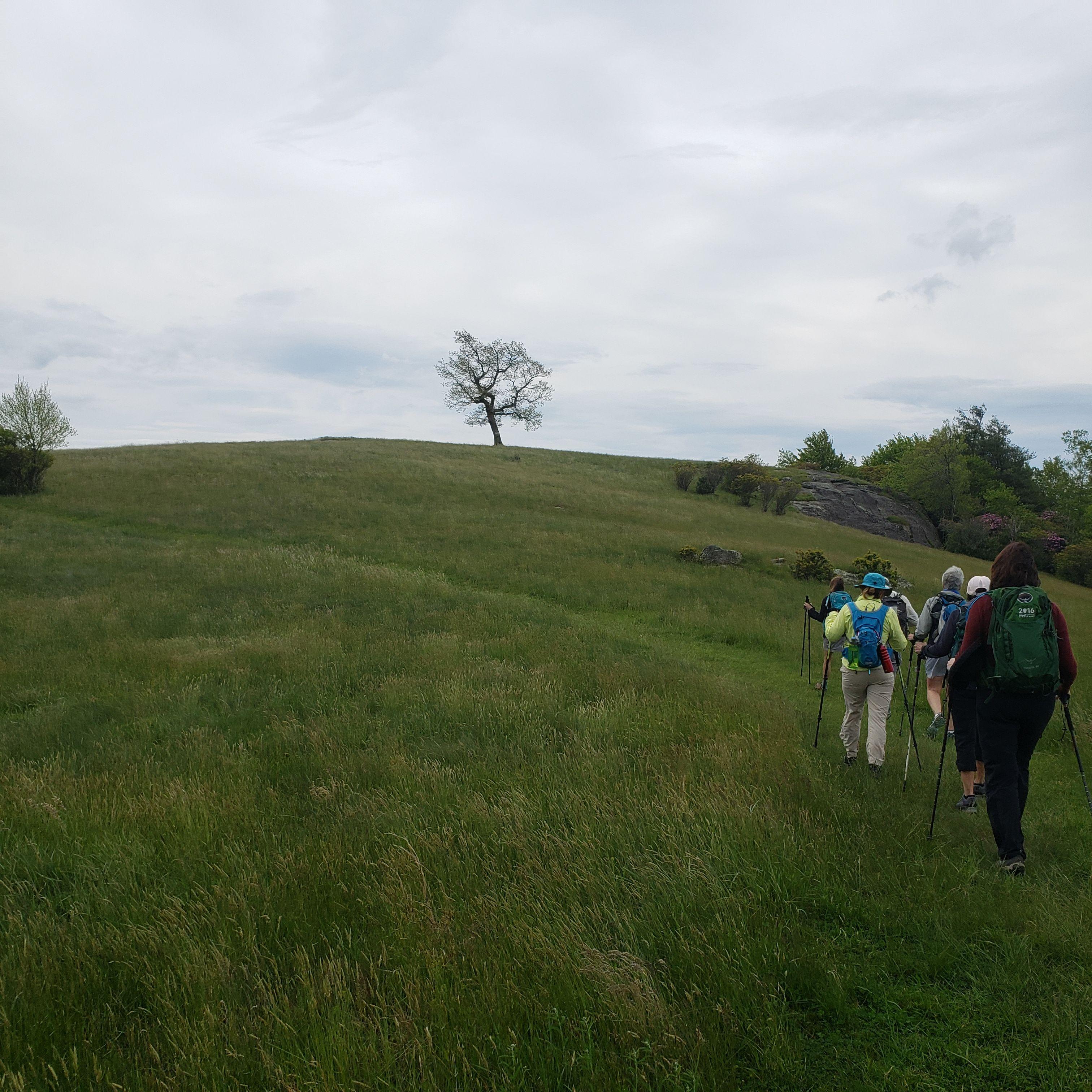 pilgrimage doug